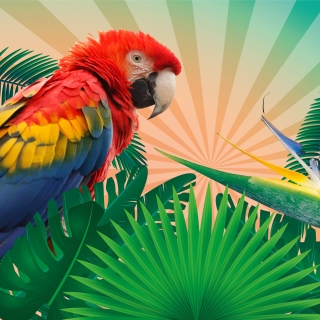 Parrot Macaw Illustration Background for iPad