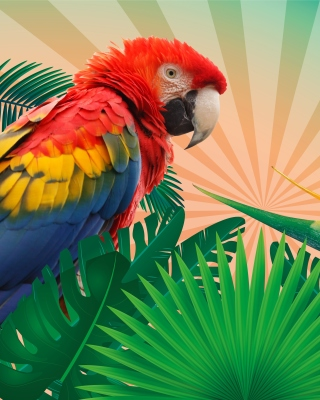 Parrot Macaw Illustration Background for 480x640