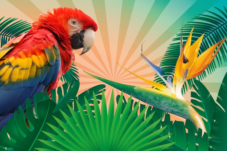 Das Parrot Macaw Illustration Wallpaper