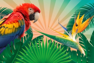 Parrot Macaw Illustration Wallpaper for HTC Wildfire
