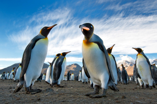 Curious Penguin Wallpaper for Android, iPhone and iPad