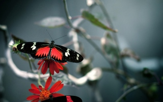 Butterfly Picture for Android, iPhone and iPad