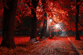 Romantic Fall Park Wallpaper for Android, iPhone and iPad