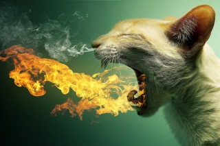Flaming Cat Wallpaper for Android, iPhone and iPad