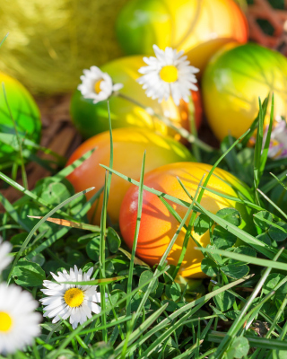 Chamomile and colored eggs - Fondos de pantalla gratis para Nokia Asha 311