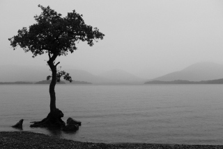 Lonely Tree Lake Wallpaper for Android, iPhone and iPad