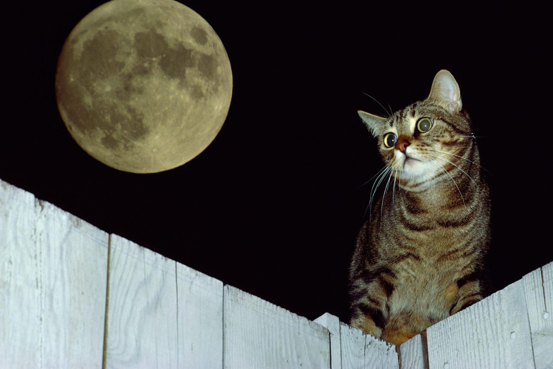 журнальные фото кота смотрящего на луну этого