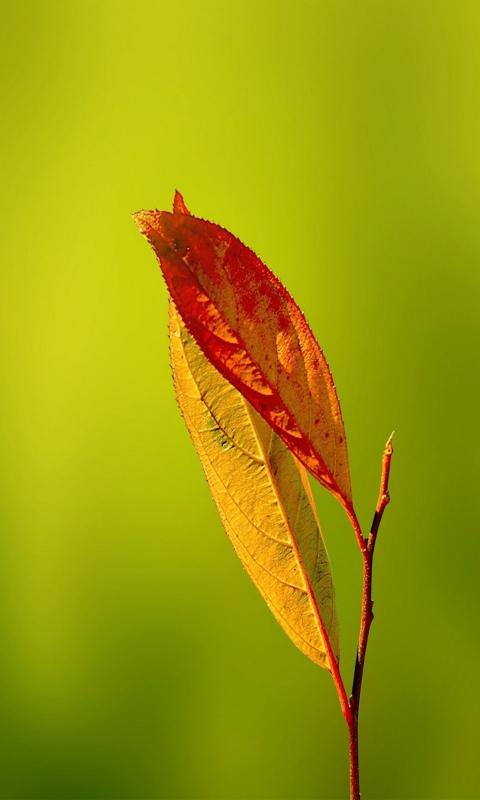 Leaf per Nokia Lumia 800