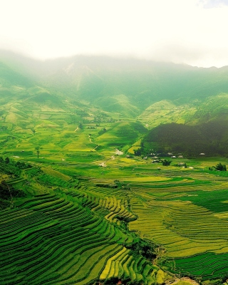 Vietnam Landscape Field in Ninhbinh Picture for Nokia Asha 305