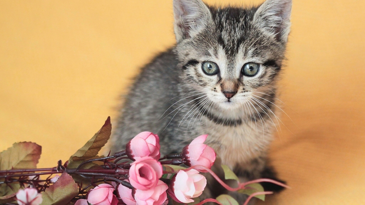 Cute Grey Kitten And Pink Flowers