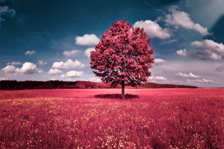 Pink Grass Field Wallpaper for Android, iPhone and iPad