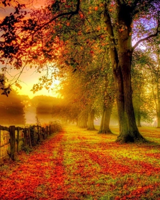 Autumn Morning sfondi gratuiti per 132x176
