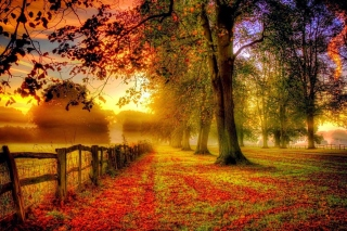 Autumn Morning Background for Android, iPhone and iPad