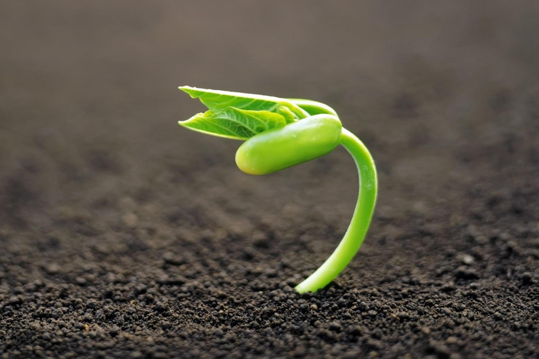 Зародыш растения скачать