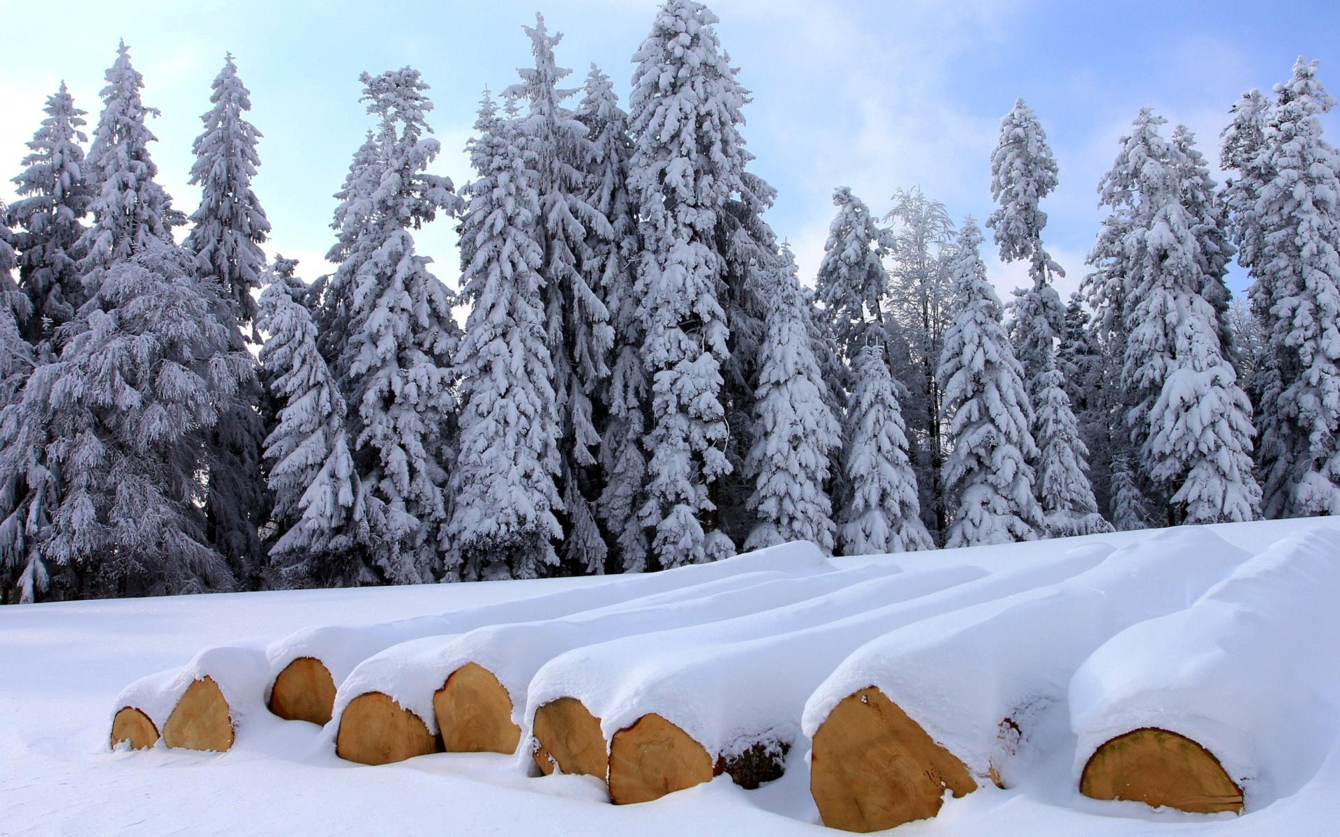 Зима деревья лес ели бесплатно