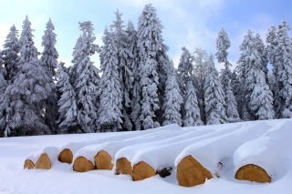 Firewood under snow Background for Android, iPhone and iPad