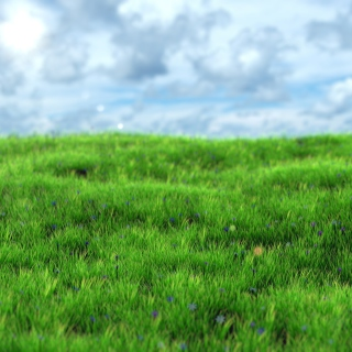 Green Grass Background for 1024x1024