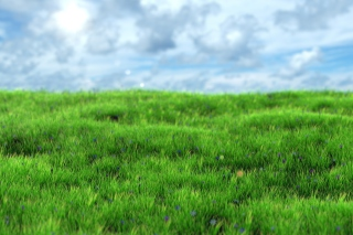 Free Green Grass Picture for Samsung Galaxy Tab 4G LTE