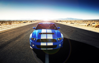 Free Shelby Picture for Android, iPhone and iPad