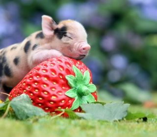 Cute Little Piglet And Strawberry - Obrázkek zdarma pro 128x128