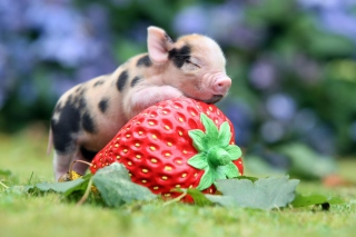 Cute Little Piglet And Strawberry Background for Android, iPhone and iPad