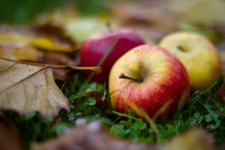 Autumn Apples - Fondos de pantalla gratis