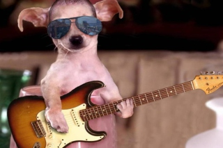Funny Dog With Guitar papel de parede para celular