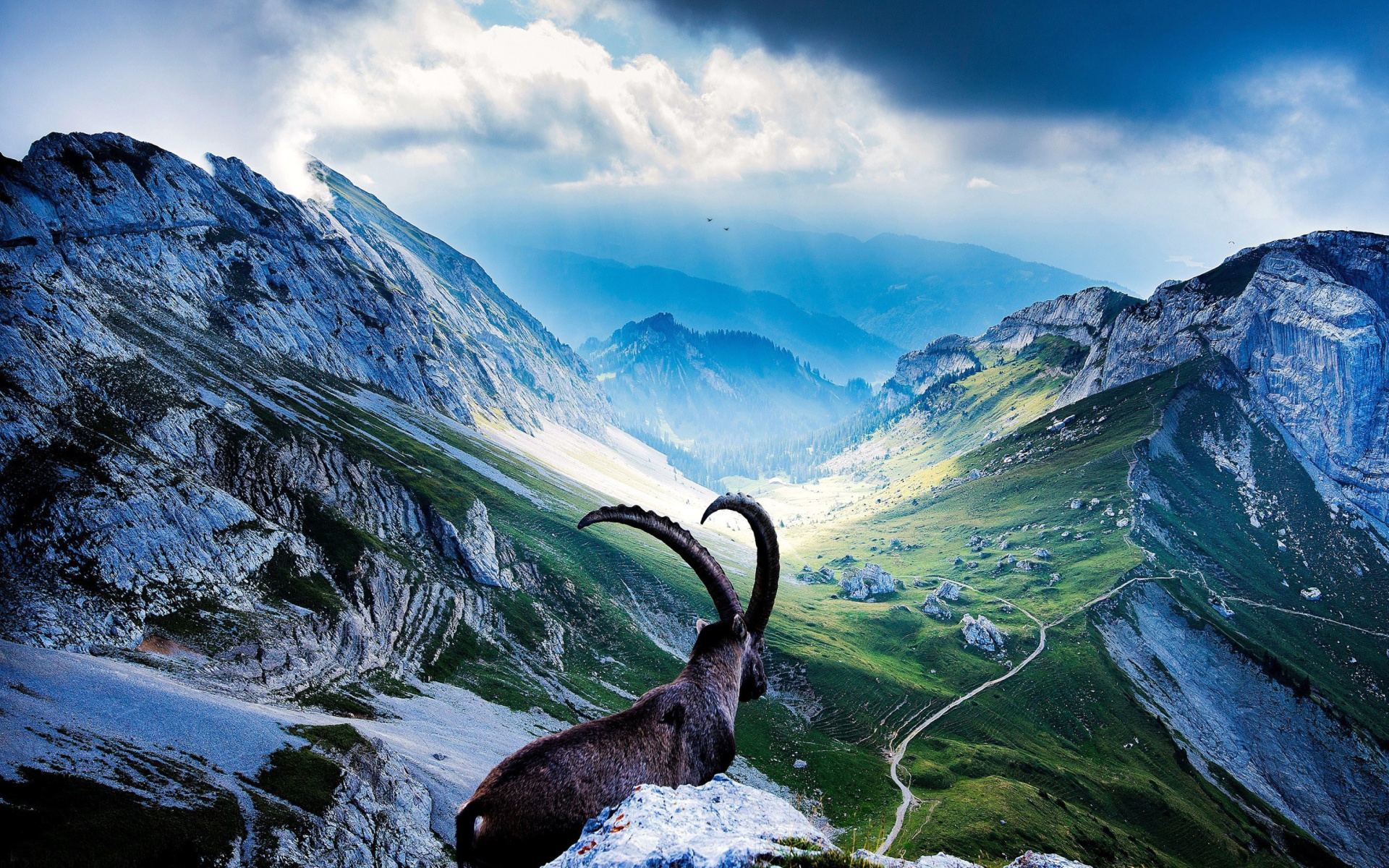 Wallpapers Wide Hd Collections: Mountains And Mountain Goat Wallpaper For Widescreen