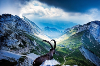 Mountains and Mountain Goat Picture for Android, iPhone and iPad