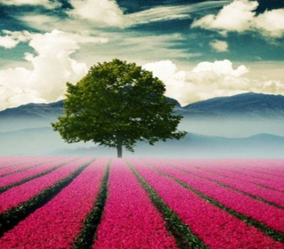 Beautiful Landscape With Tree And Pink Flower Field - Obrázkek zdarma pro iPad 2