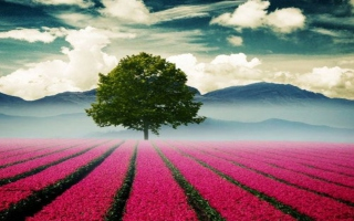 Beautiful Landscape With Tree And Pink Flower Field Wallpaper for Android, iPhone and iPad