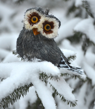 Free Funny Fluffy Eyes Owl Picture for HTC Titan