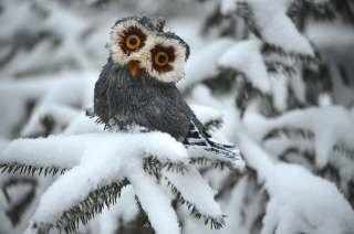 Funny Fluffy Eyes Owl Wallpaper for Android, iPhone and iPad