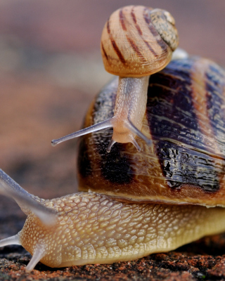 Free Snail Family Picture for 640x1136