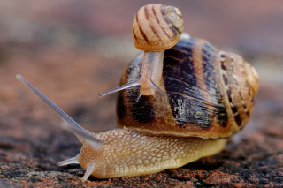 Snail Family Background for Android, iPhone and iPad