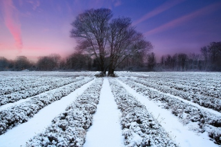 Winter Plants Wallpaper for Android, iPhone and iPad