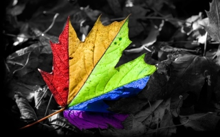 Free Colorful Leaf Picture for Android, iPhone and iPad