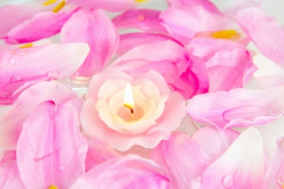 Candle on lotus petals Background for Android, iPhone and iPad