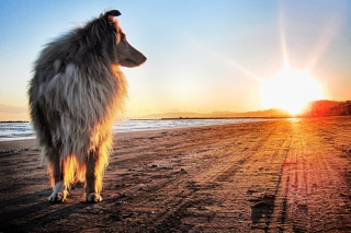 Dog In The Morning Wallpaper for Android, iPhone and iPad