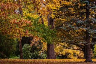 Australian National Botanic Gardens Background for Android, iPhone and iPad