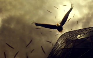 Eagle Flight Wallpaper for Android, iPhone and iPad