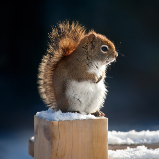Cute squirrel in winter Picture for iPad 3