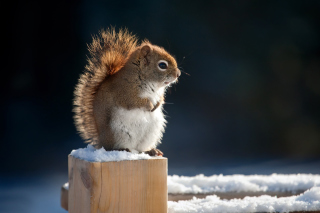 Cute squirrel in winter Wallpaper for Android, iPhone and iPad