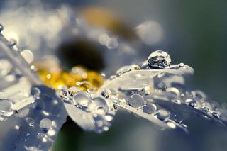 Free Raindrops HD Macro Picture for Android, iPhone and iPad