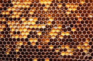 Honey Wallpaper for 960x854