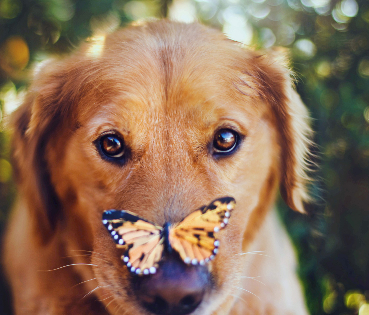 Screenshot №1 pro téma Dog And Butterfly 1200x1024