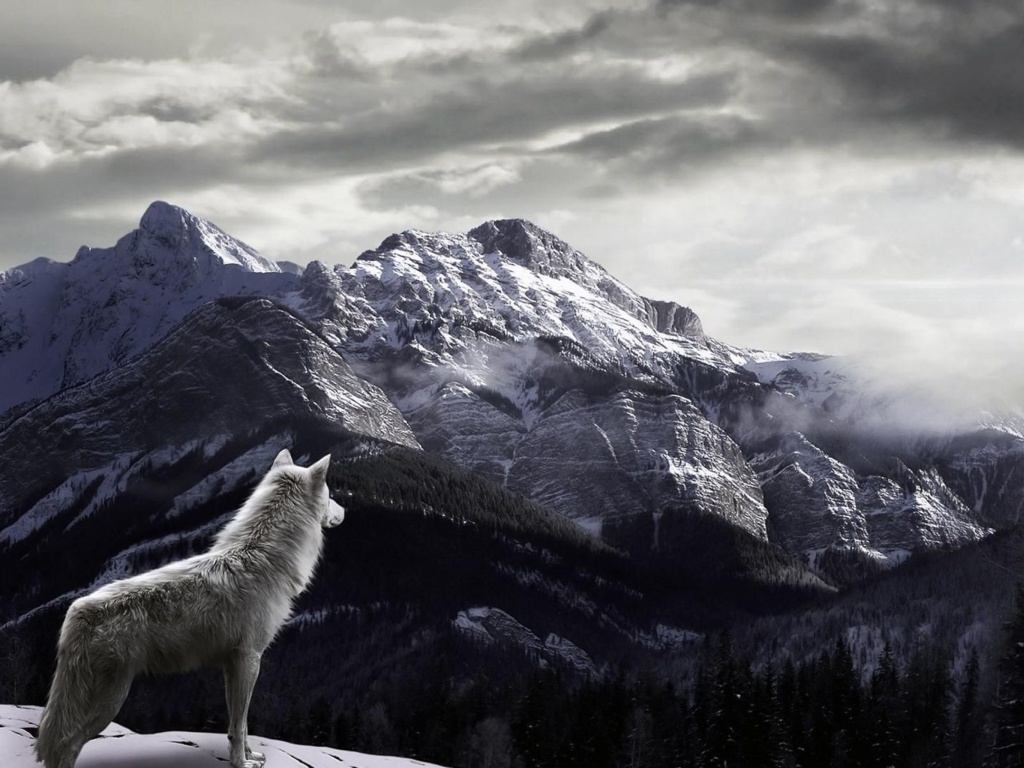Screenshot №1 pro téma Wolf in Mountain 1024x768