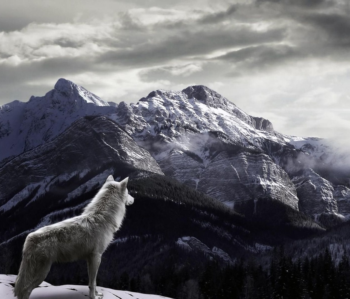 Screenshot №1 pro téma Wolf in Mountain 1200x1024