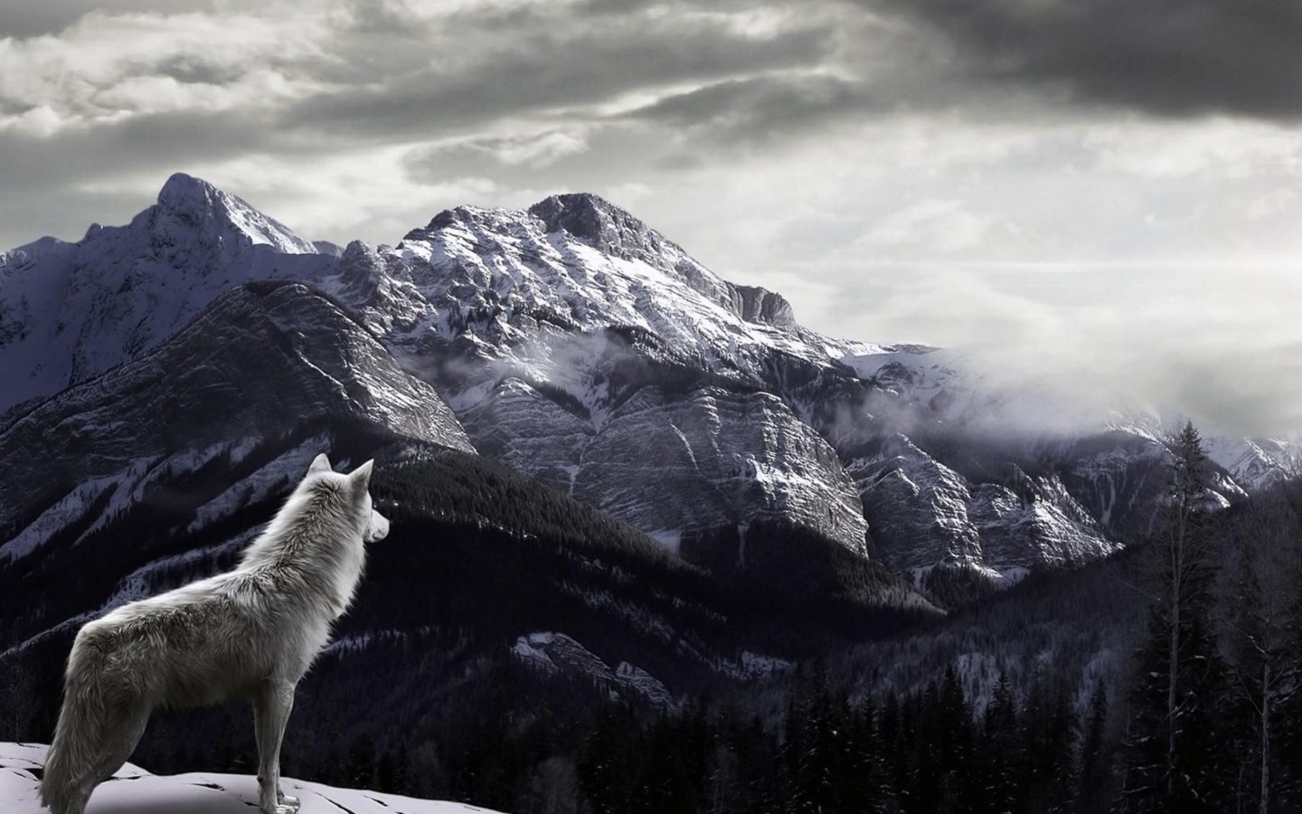 Sfondi Wolf in Mountain 1440x900