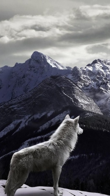 Screenshot №1 pro téma Wolf in Mountain 360x640